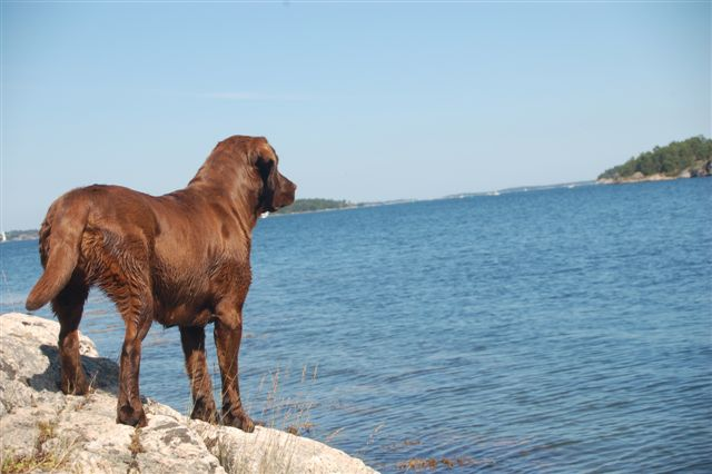 Hund med utsikt